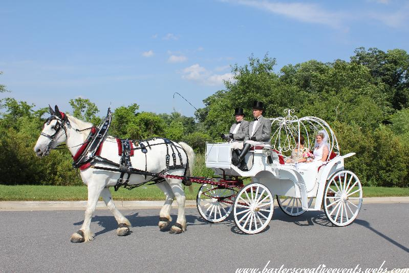 Chariots For Hire Horse Drawn Carriage And White Dove